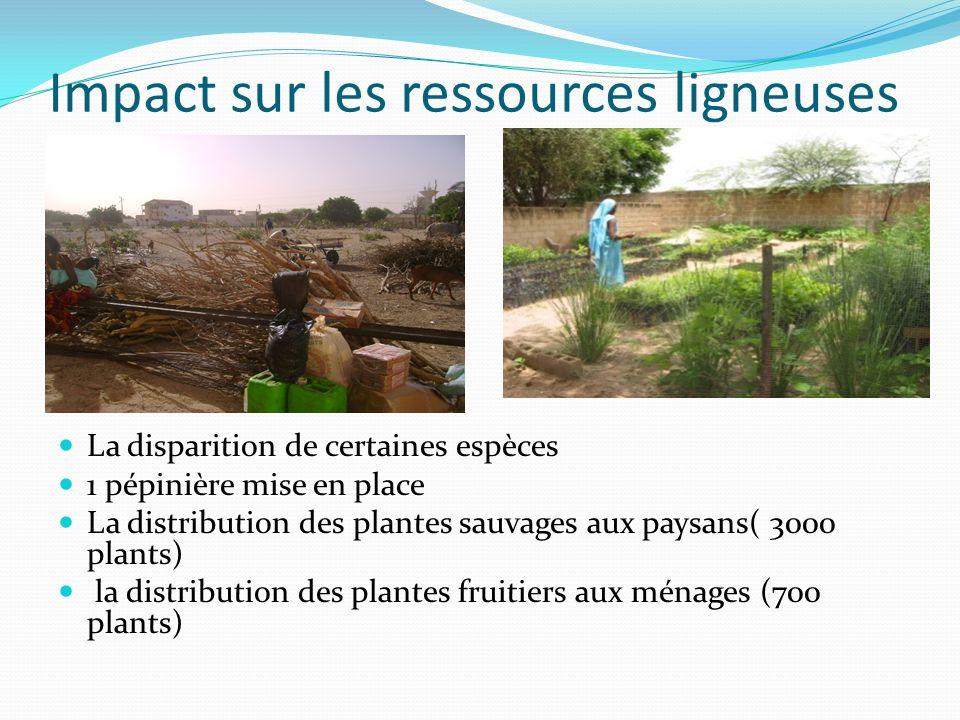 Impact sur les ressources ligneuses La disparition de certaines espèces 1 pépinière mise en place La distribution des plantes sauvages aux paysans( 30