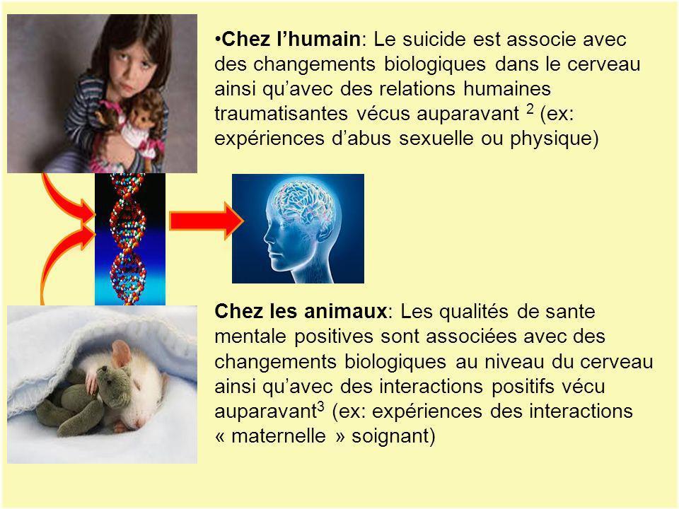 Chez lhumain: Le suicide est associe avec des changements biologiques dans le cerveau ainsi quavec des relations humaines traumatisantes vécus auparav