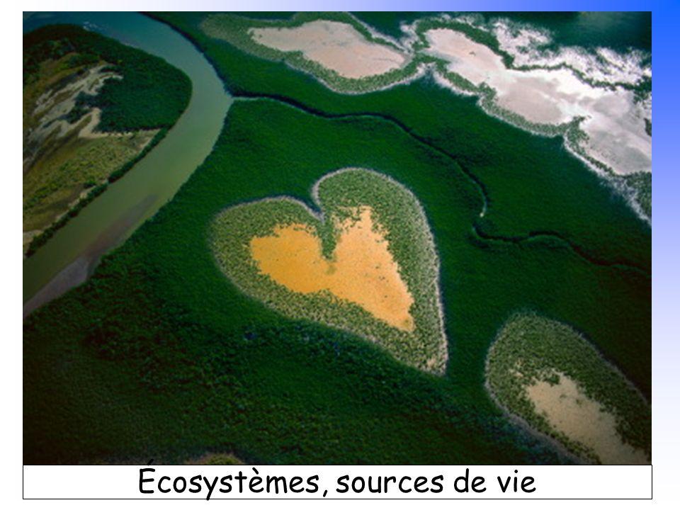 B. Pajot - mars 2007 Écosystèmes, sources de vie