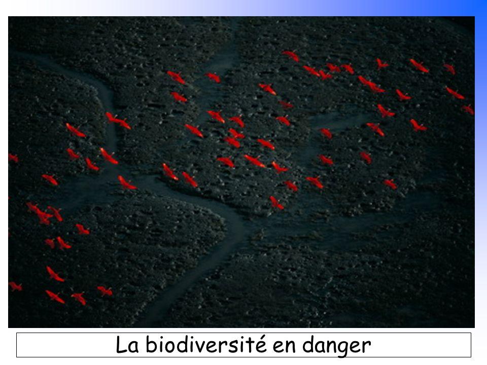 B. Pajot - mars 2007 La biodiversité en danger