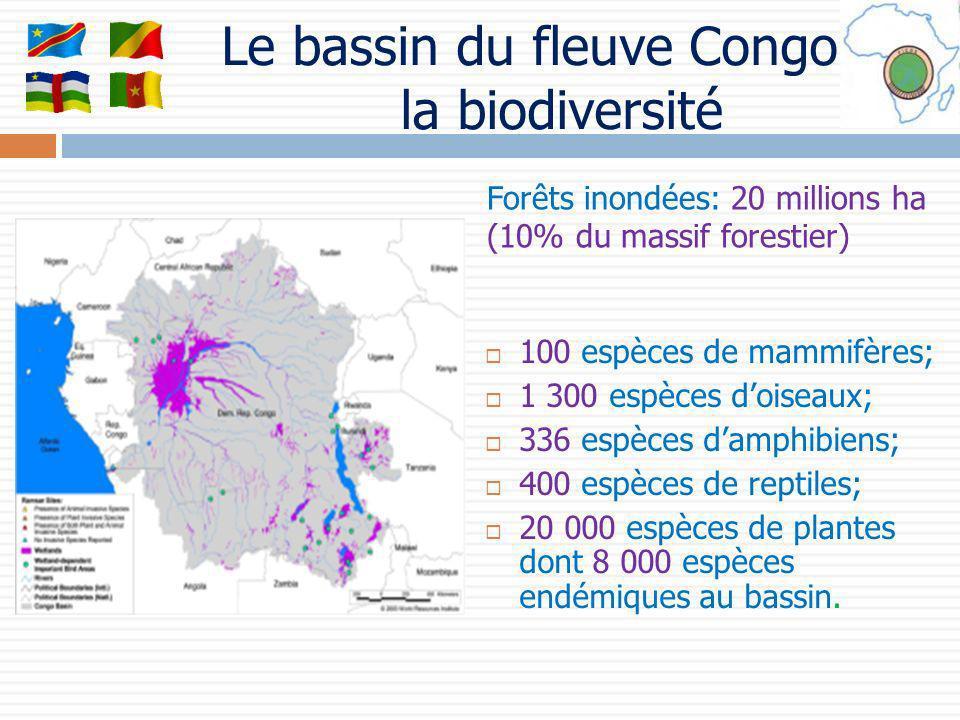 Le bassin du fleuve Congo et la biodiversité 100 espèces de mammifères; 1 300 espèces doiseaux; 336 espèces damphibiens; 400 espèces de reptiles; 20 0