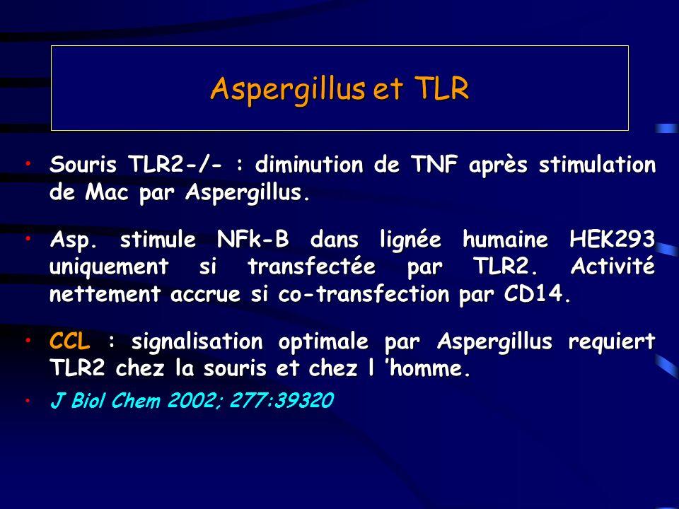 Aspergillus et TLR Souris TLR2-/- : diminution de TNF après stimulation de Mac par Aspergillus.Souris TLR2-/- : diminution de TNF après stimulation de