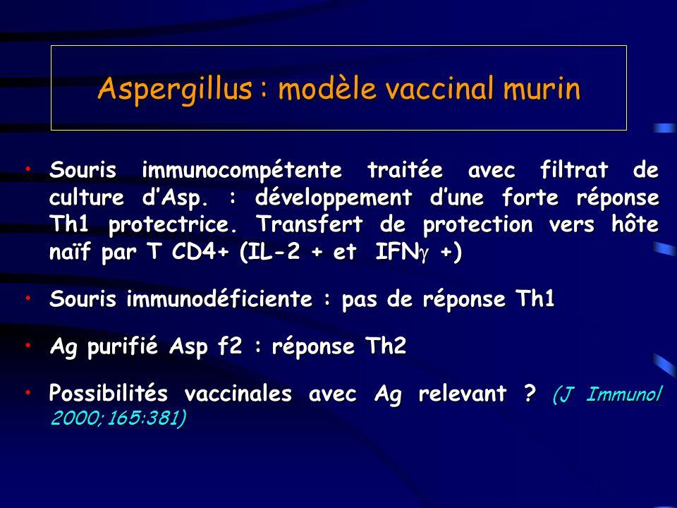 Aspergillus : modèle vaccinal murin Souris immunocompétente traitée avec filtrat de culture dAsp. : développement dune forte réponse Th1 protectrice.