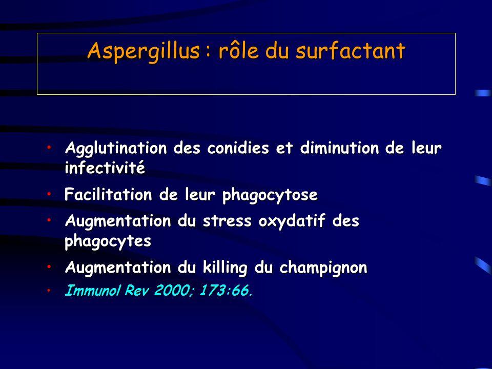 Aspergillus : rôle du surfactant Agglutination des conidies et diminution de leur infectivitéAgglutination des conidies et diminution de leur infectiv