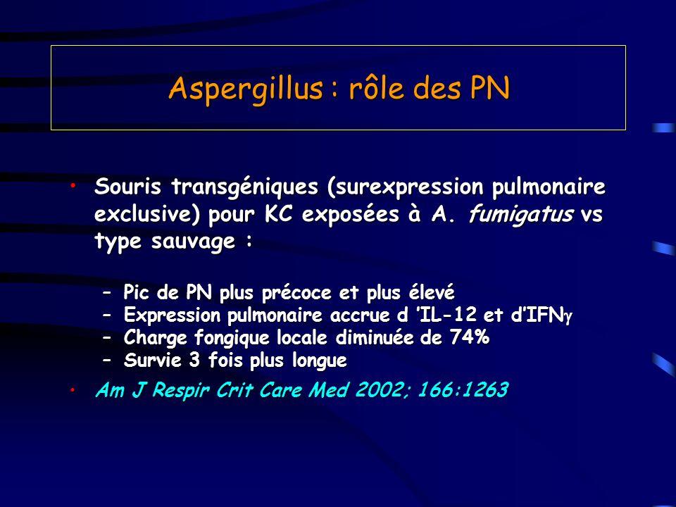 Aspergillus : rôle des PN Souris transgéniques (surexpression pulmonaire exclusive) pour KC exposées à A. fumigatus vs type sauvage :Souris transgéniq