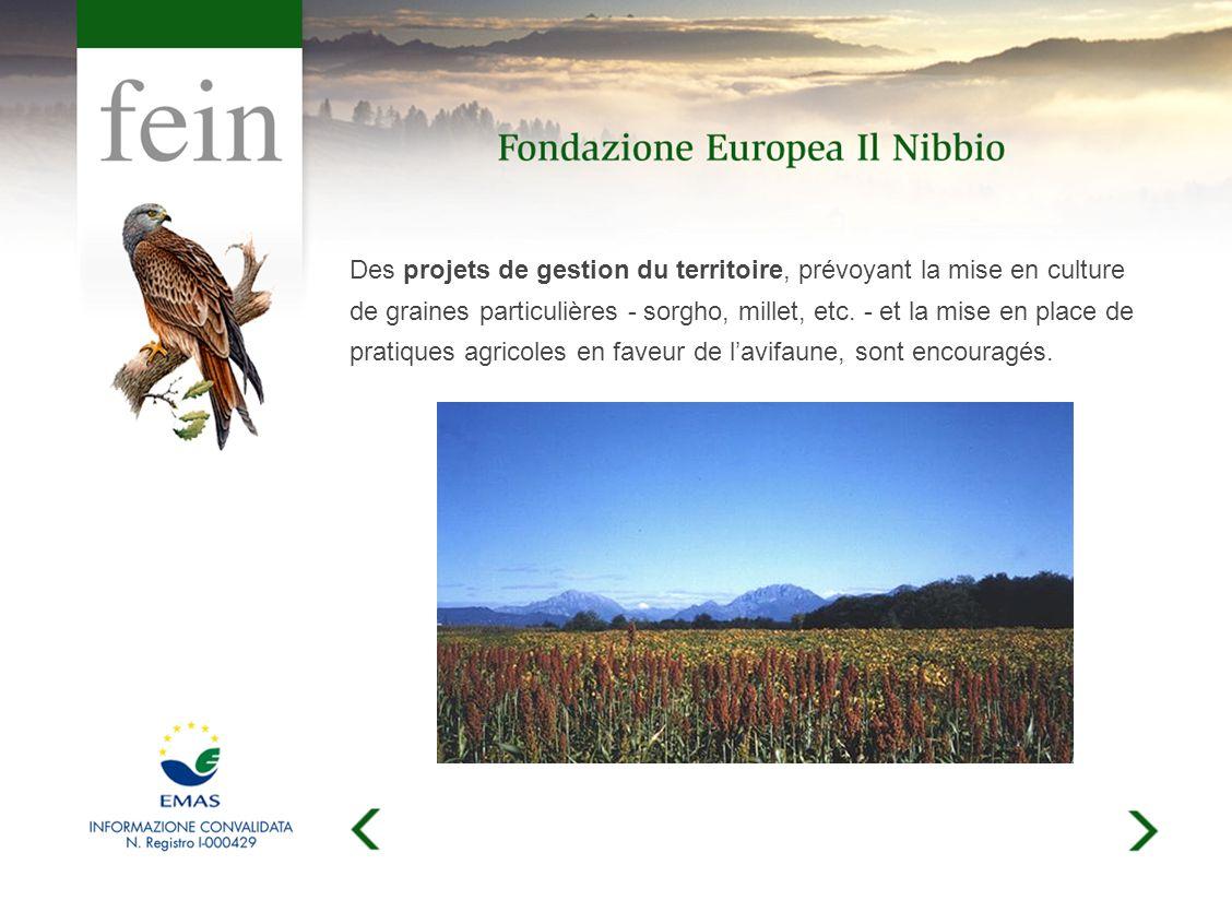 Des projets de gestion du territoire, prévoyant la mise en culture de graines particulières - sorgho, millet, etc.