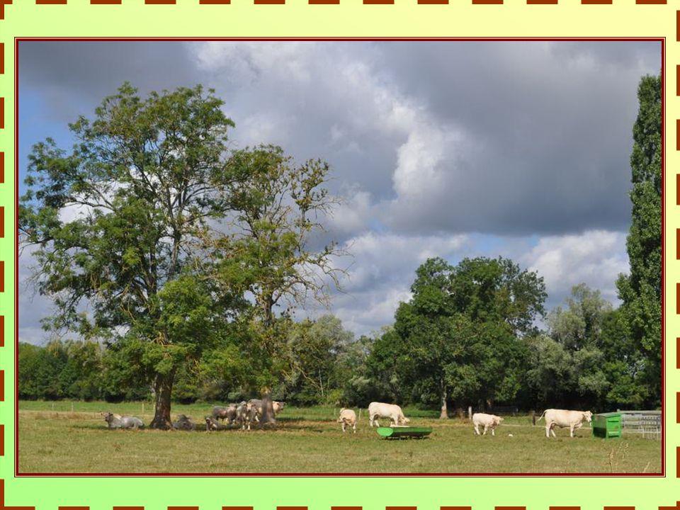 LA FERME DU MARAULT Avec la création de la Ferme du Marault en 1997, les professionnels de l élevage charolais se sont dotés d un outils de promotion et de commercialisation unique pour la première race allaitante de France et d Europe.