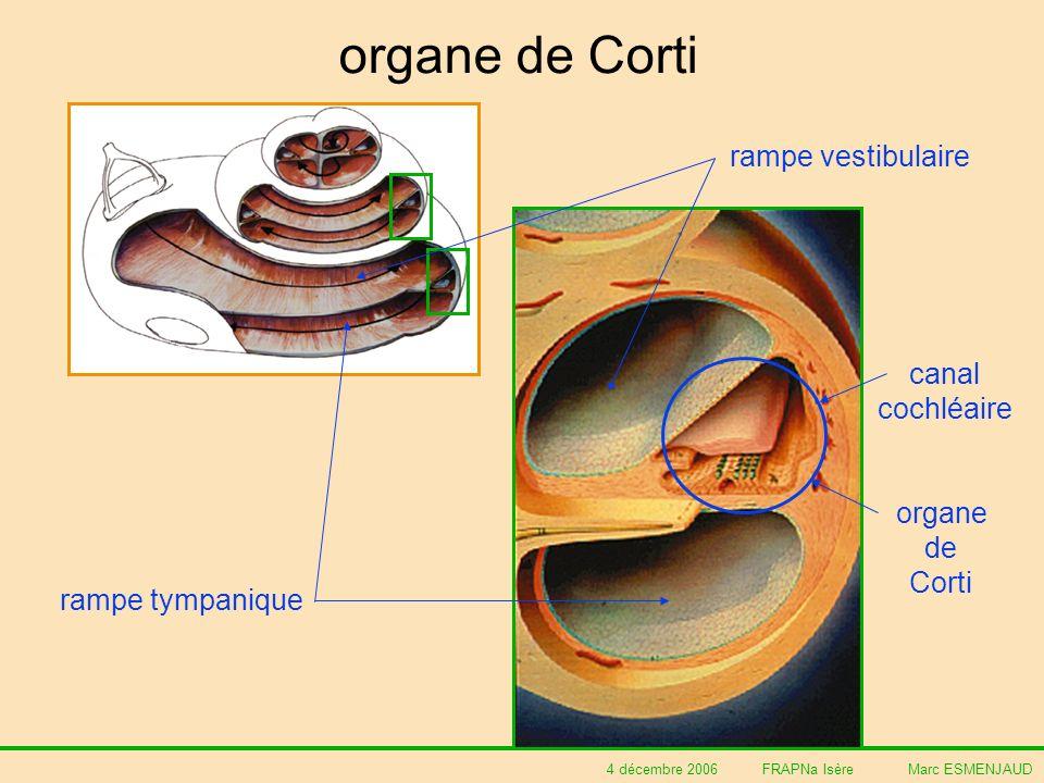 4 décembre 2006 FRAPNa Isère Marc ESMENJAUD organe de Corti rampe vestibulaire rampe tympanique canal cochléaire organe de Corti