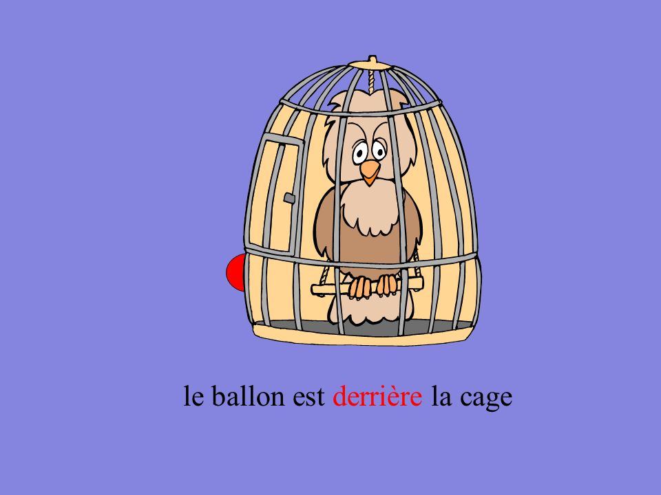 le ballon est entre la cage et les noix
