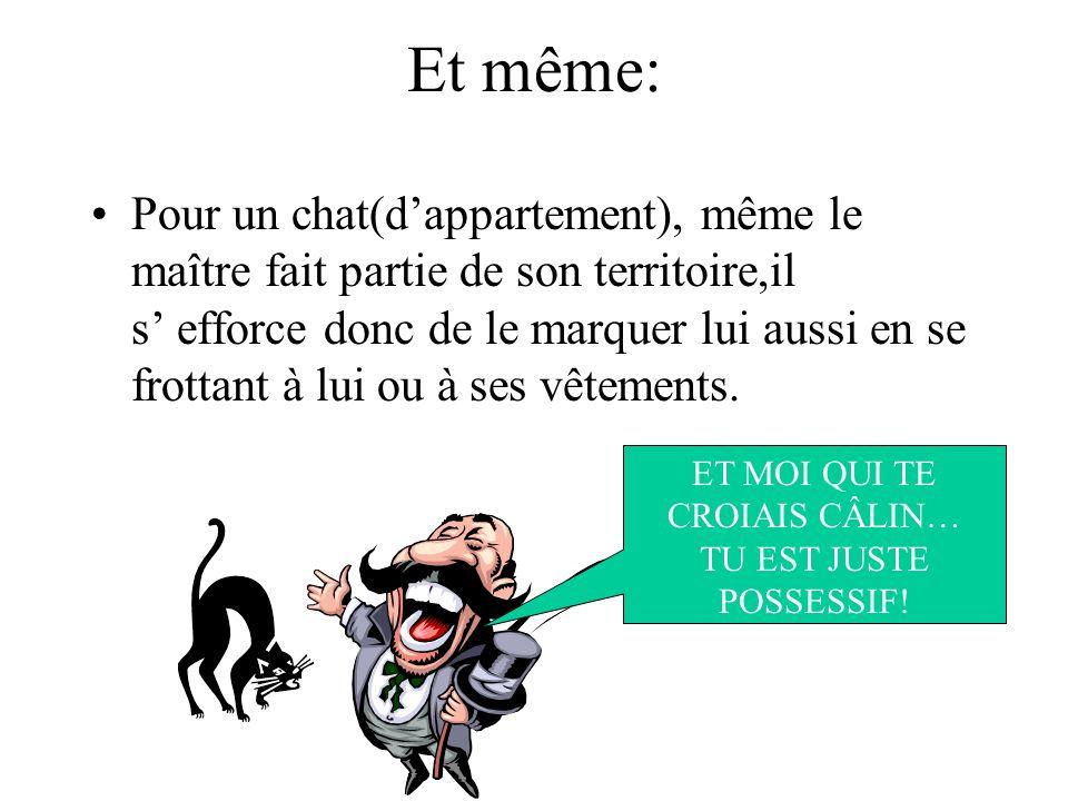 Et même: Pour un chat(dappartement), même le maître fait partie de son territoire,il s efforce donc de le marquer lui aussi en se frottant à lui ou à ses vêtements.