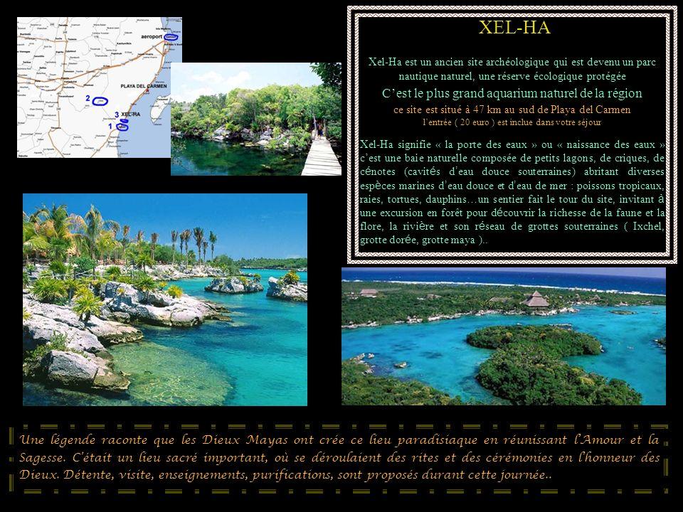 XEL-HA Xel-Ha est un ancien site archéologique qui est devenu un parc nautique naturel, une réserve écologique protégée Cest le plus grand aquarium na