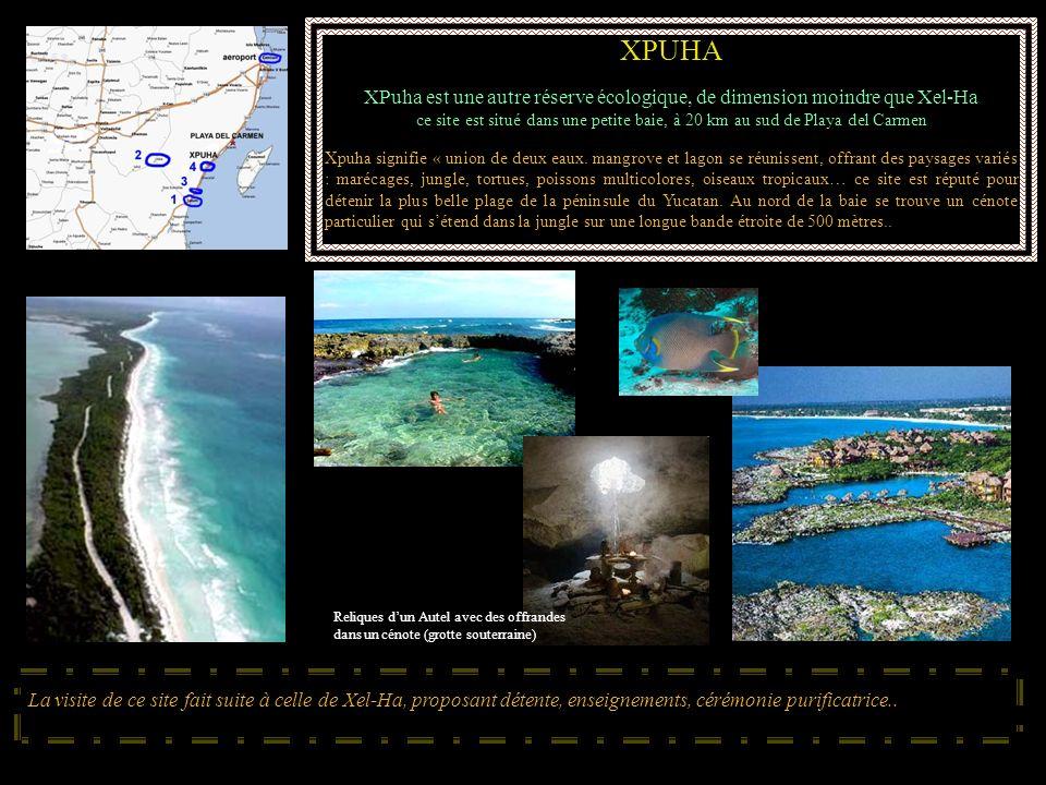 XPUHA XPuha est une autre réserve écologique, de dimension moindre que Xel-Ha ce site est situé dans une petite baie, à 20 km au sud de Playa del Carm
