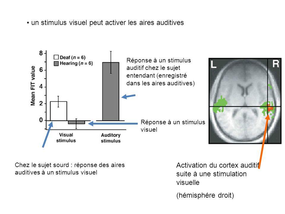 une vibration entraîne une activation des aires auditives Aire somesthésique Réponse chez la personne sourde et entendante Aires auditives Réponse che
