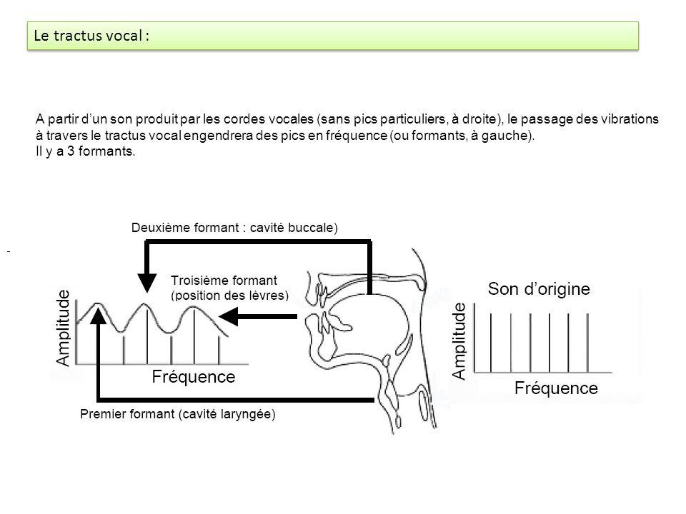 Grands principes du langage oral : Les sons sont des vibrations de lair Fondamentale F0 F1 F2 F3 Ces harmoniques = formants
