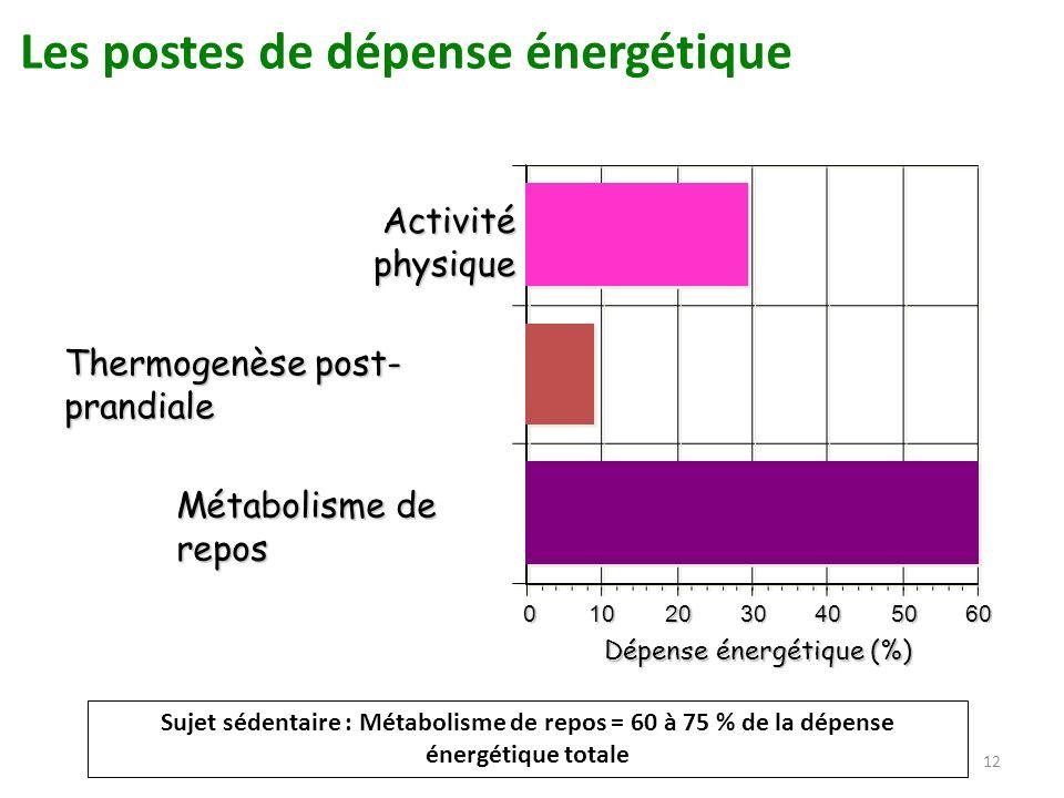 12 Métabolisme de repos Thermogenèse post- prandiale Activité physique 0102030405060 Dépense énergétique (%) Les postes de dépense énergétique Sujet s