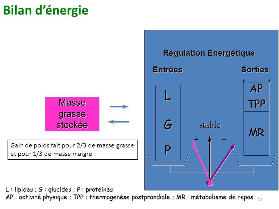 13 Masse grasse stockée EntréesSorties Régulation Energétique stable + - L G P AP TPP MR L : lipides ; G : glucides ; P : protéines AP : activité phys