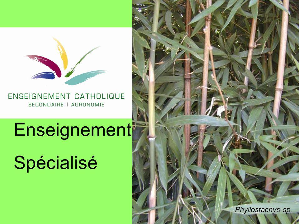 22 Seuils 1 - 2 Seuil phase 1 : lire un thermomètre ordinaire.