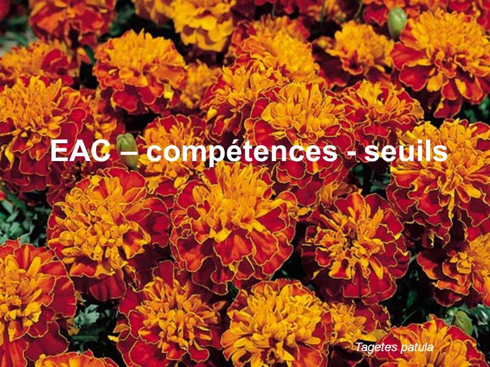 16 Tagetes patula EAC – compétences - seuils