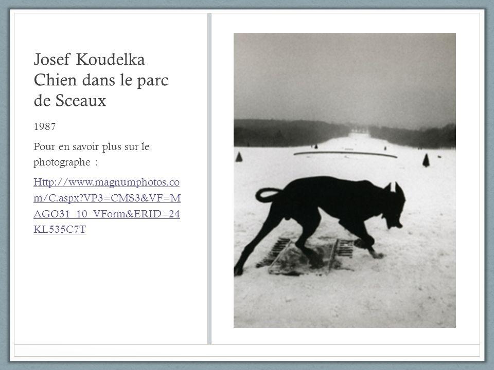 Josef Koudelka Chien dans le parc de Sceaux 1987 Pour en savoir plus sur le photographe : Http://www.magnumphotos.co m/C.aspx?VP3=CMS3&VF=M AGO31_10_V