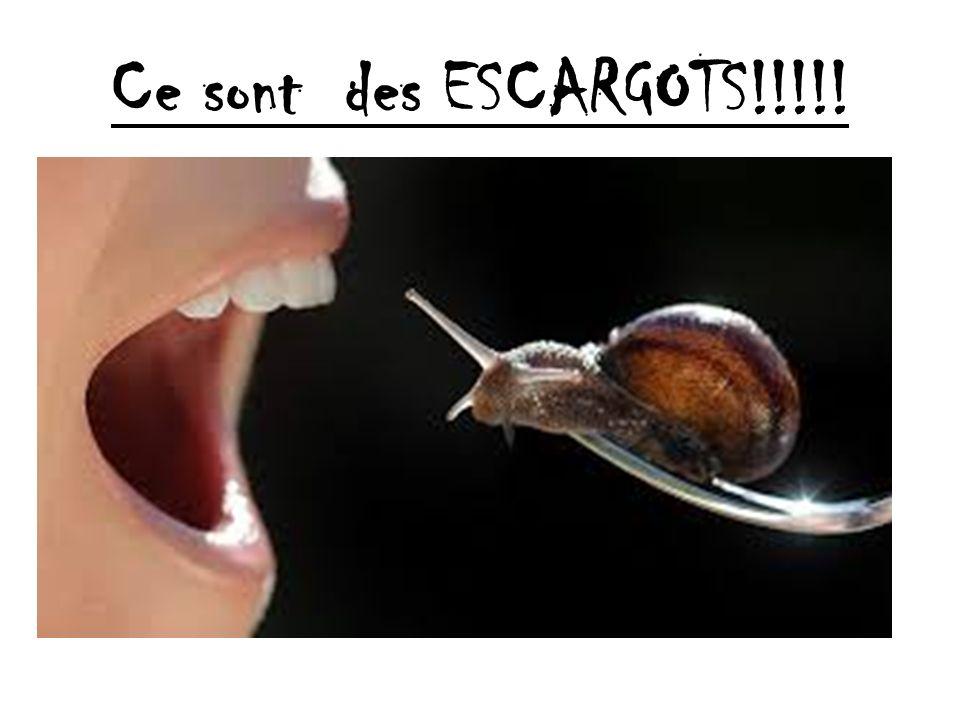 Ce sont des ESCARGOTS!!!!!