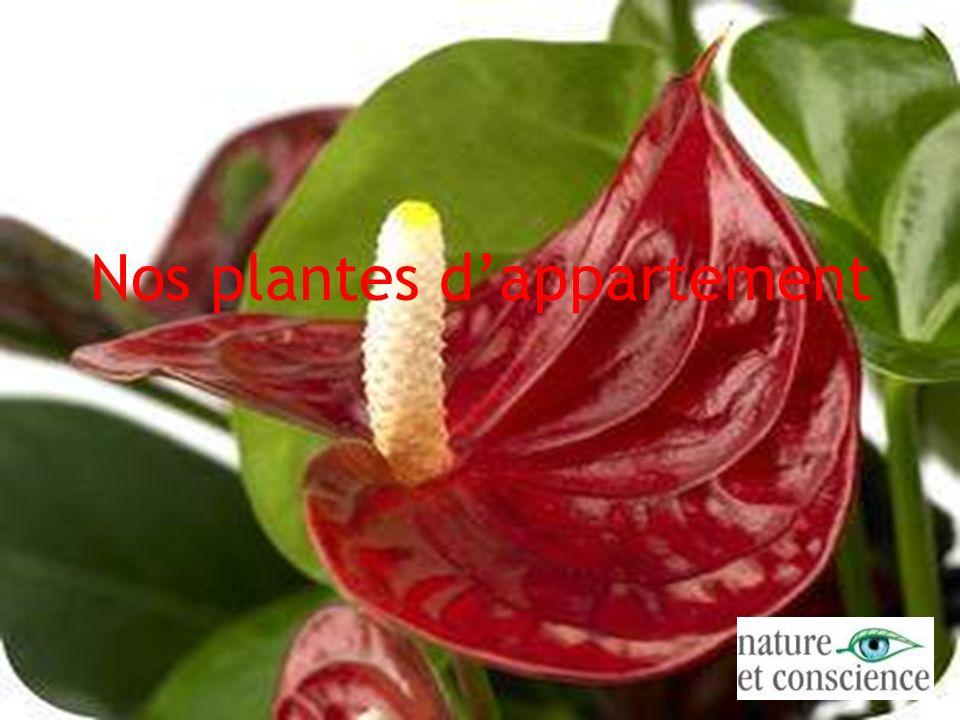 Nos plantes dappartement