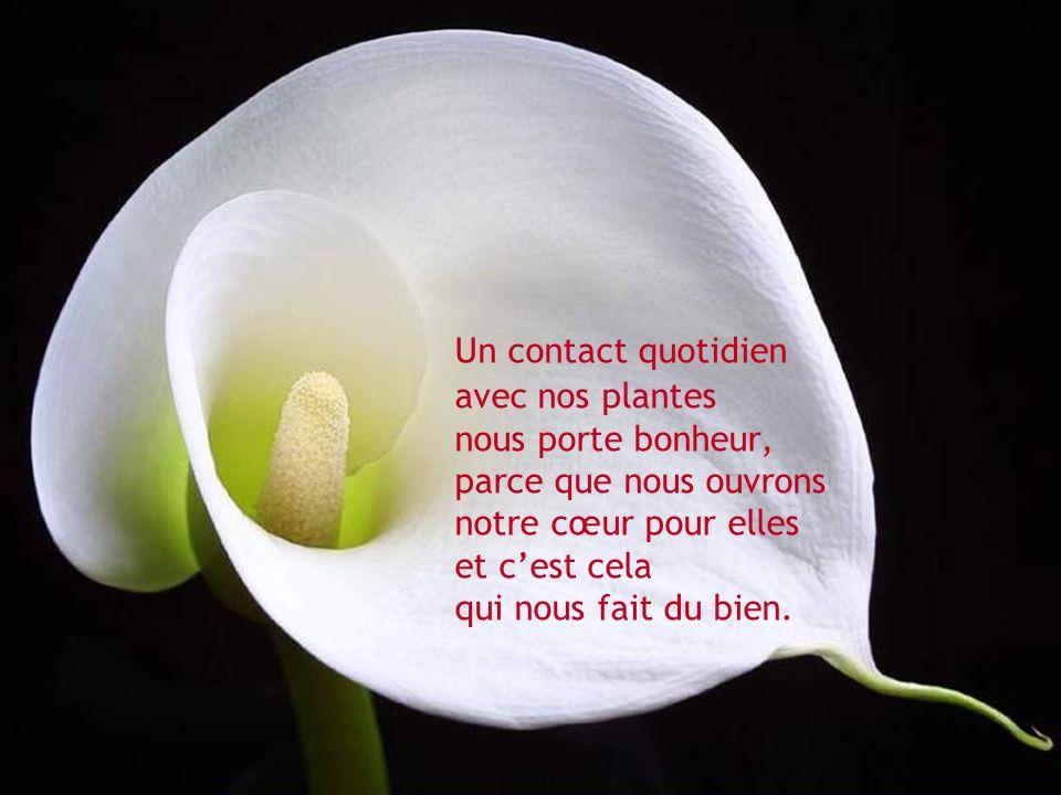 Un contact quotidien avec nos plantes nous porte bonheur, parce que nous ouvrons notre cœur pour elles et cest cela qui nous fait du bien.