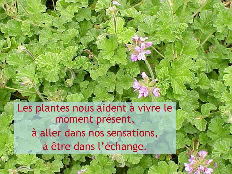 Les plantes nous aident à vivre le moment présent, à aller dans nos sensations, à être dans léchange.
