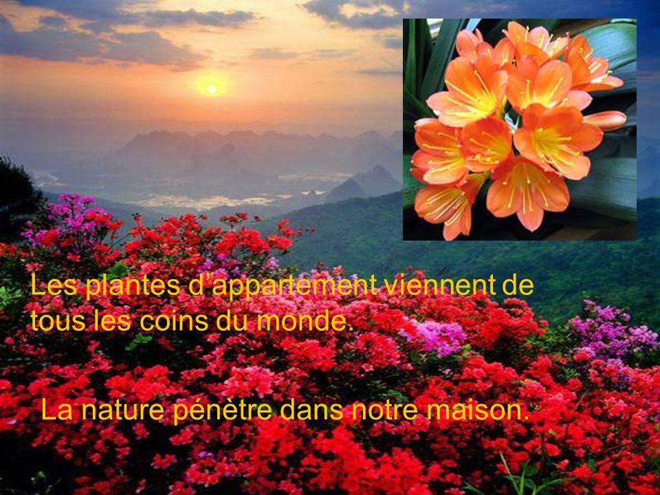 Si nos plantes réagissent à notre parole, à nos caresses, à nos chansons, à notre cœur ouvert…