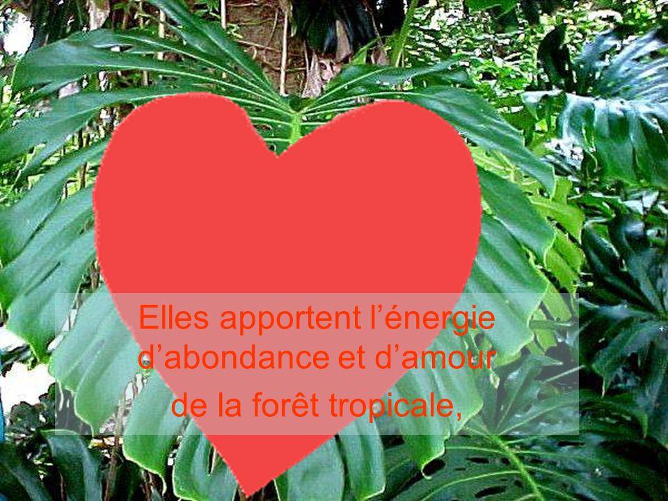 Elles apportent lénergie dabondance et damour de la forêt tropicale,