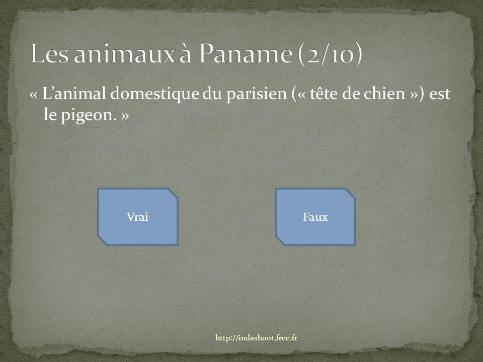 « Lanimal domestique du parisien (« tête de chien ») est le pigeon.