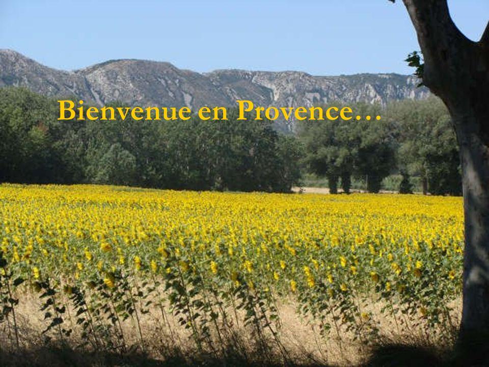 Bienvenue en Provence…