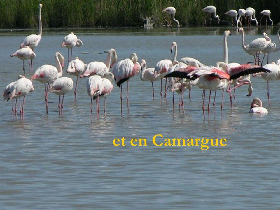 et en Camargue