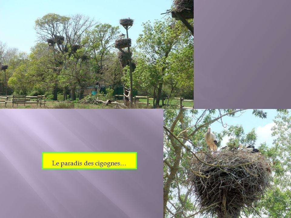 Le paradis des cigognes…