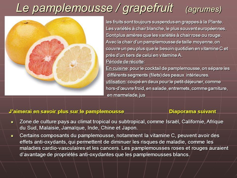 Le pamplemousse / grapefruit (agrumes) les fruits sont toujours suspendus en grappes à la Plante. Les variétés à chair blanche, le plus souvent europé