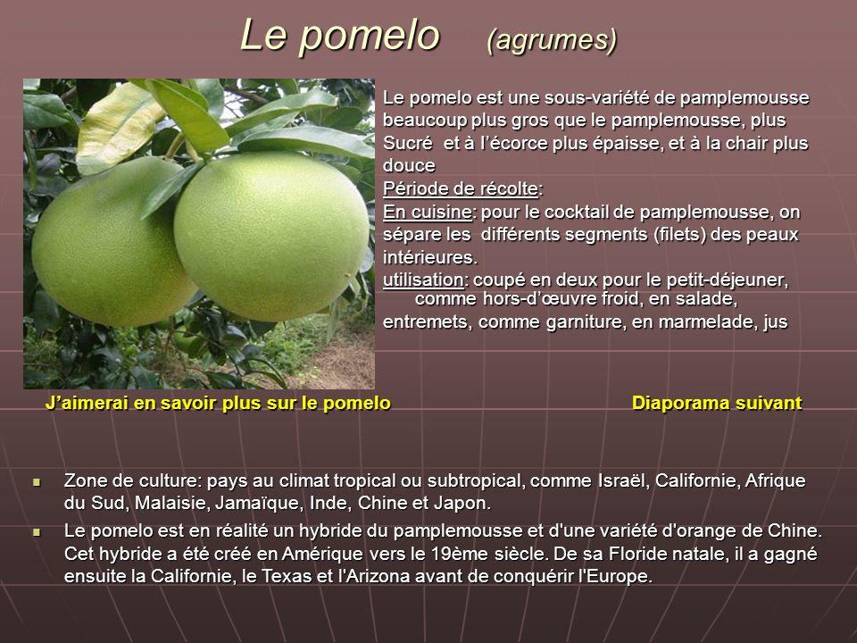 Le pomelo (agrumes) Le pomelo est une sous-variété de pamplemousse beaucoup plus gros que le pamplemousse, plus Sucré et à Iécorce plus épaisse, et à