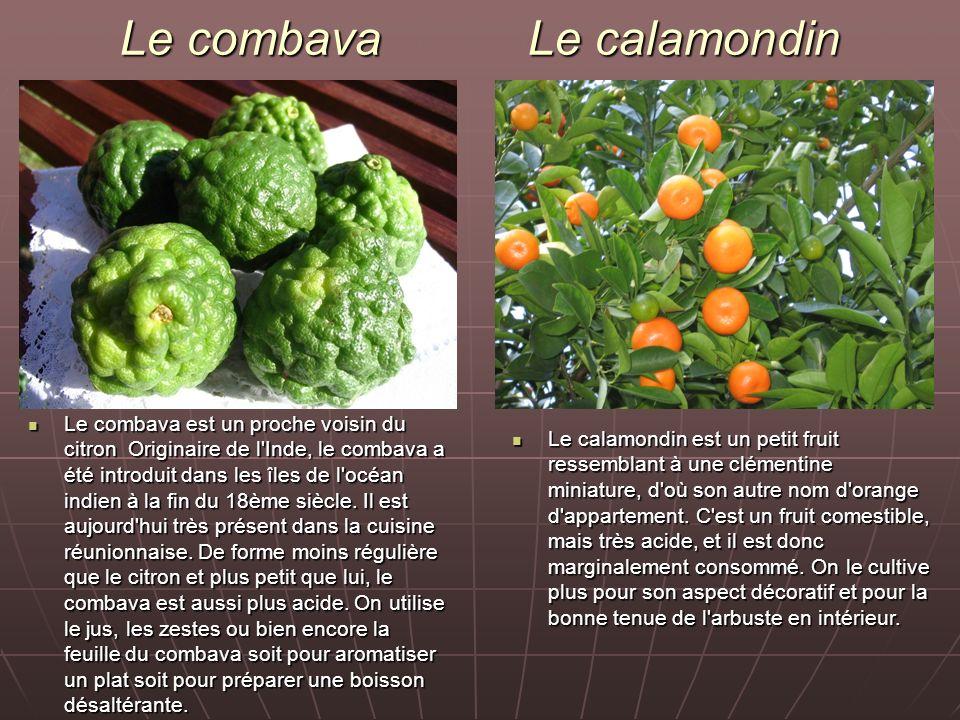 Le combava Le calamondin Le combava est un proche voisin du citron Originaire de l'Inde, le combava a été introduit dans les îles de l'océan indien à