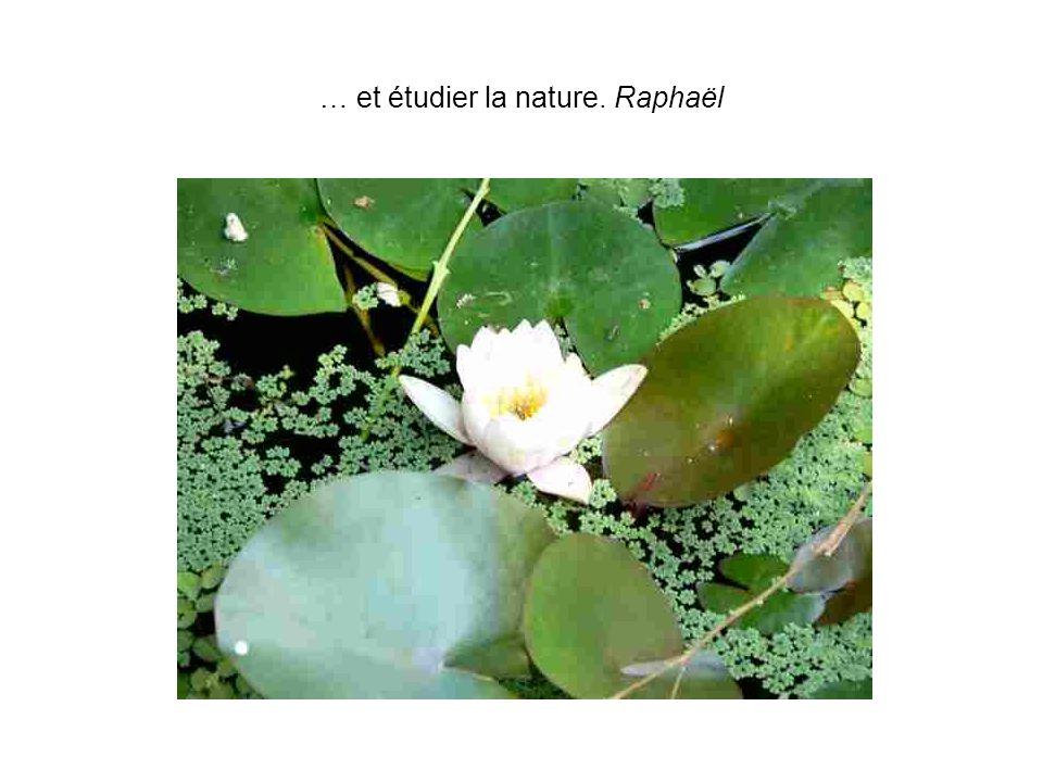 … et étudier la nature. Raphaël