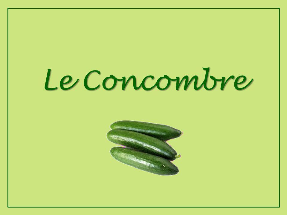 Tout sur le Concombre et le Persil andre.hernandez@sfr.fr