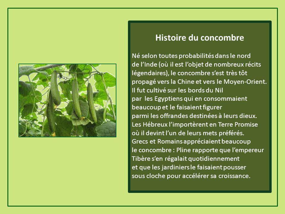 Histoire du concombre Né selon toutes probabilités dans le nord de lInde (où il est lobjet de nombreux récits légendaires), le concombre sest très tôt propagé vers la Chine et vers le Moyen-Orient.