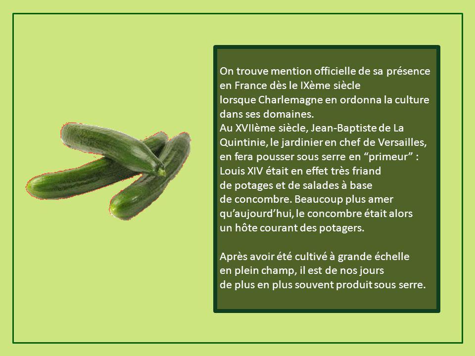 Histoire du concombre Né selon toutes probabilités dans le nord de lInde (où il est lobjet de nombreux récits légendaires), le concombre sest très tôt