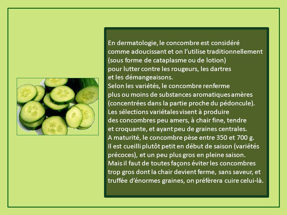 En dermatologie, le concombre est considéré comme adoucissant et on lutilise traditionnellement (sous forme de cataplasme ou de lotion) pour lutter contre les rougeurs, les dartres et les démangeaisons.