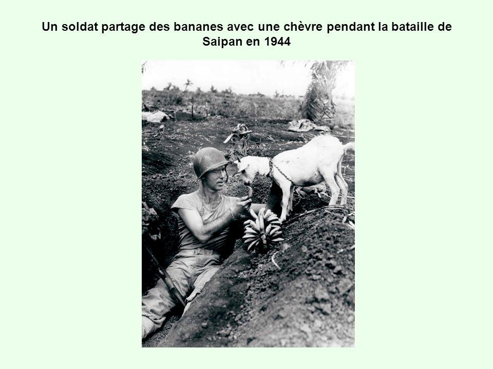 Un soldat partage des bananes avec une chèvre pendant la bataille de Saipan en 1944