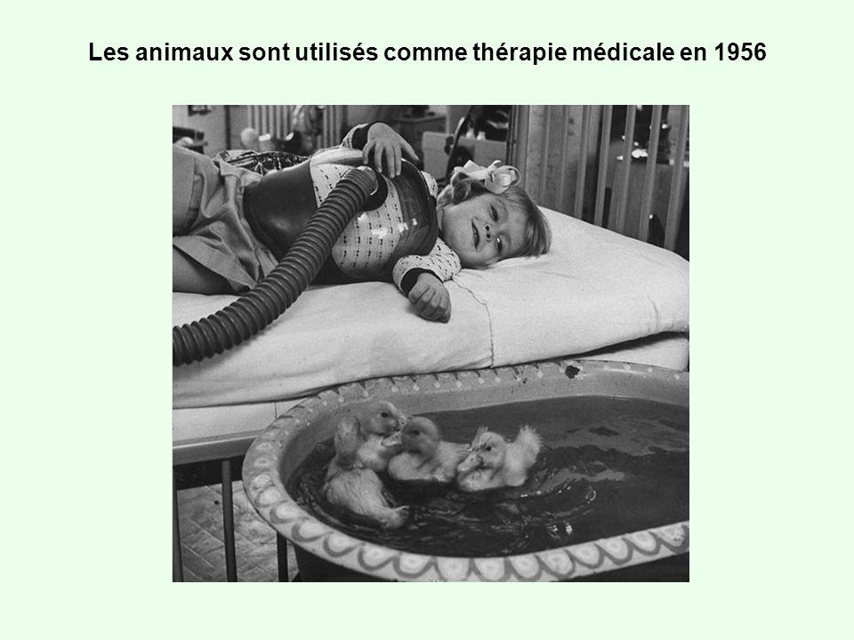 Les animaux sont utilisés comme thérapie médicale en 1956