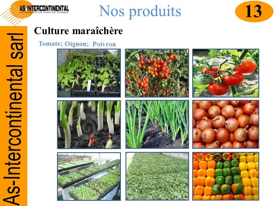 Nos produits Culture maraîchère Tomate; 13 Oignon; Poivron