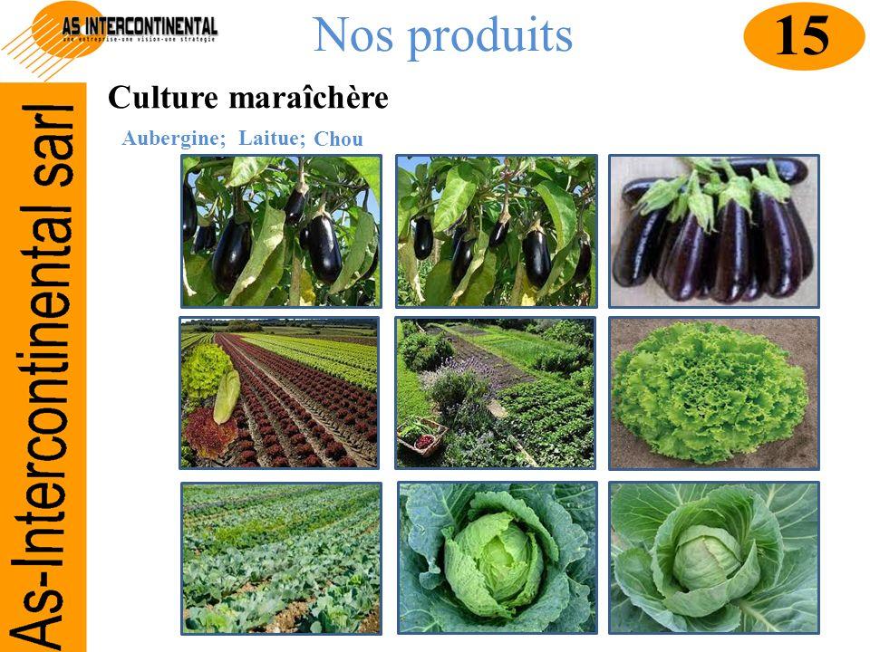 Nos produits Culture maraîchère Aubergine; 15 Laitue; Chou