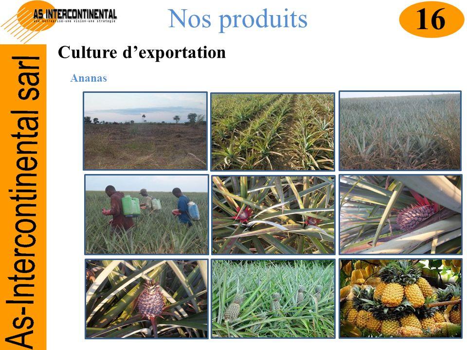 Nos produits Culture dexportation Ananas 16