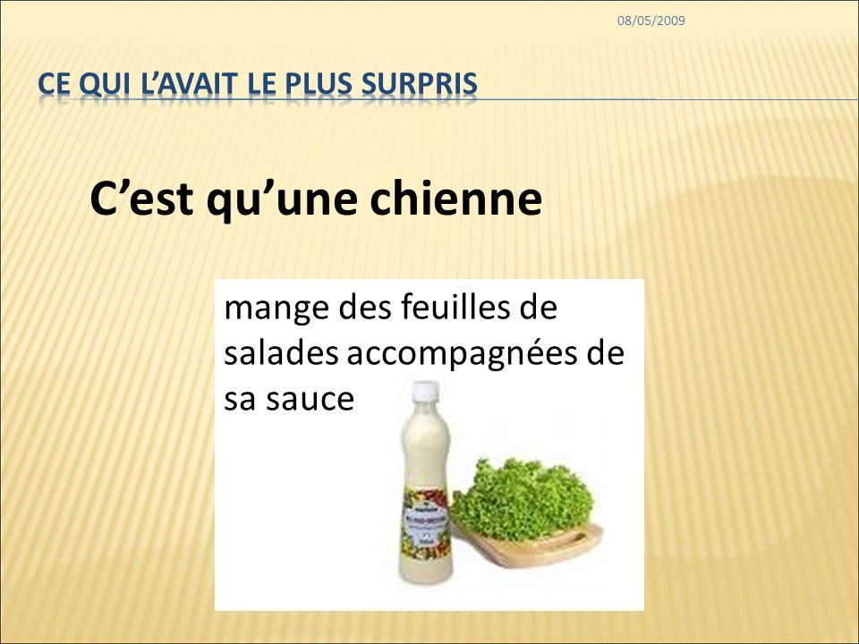 08/05/2009 mange des feuilles de salades accompagnées de sa sauce Cest quune chienne
