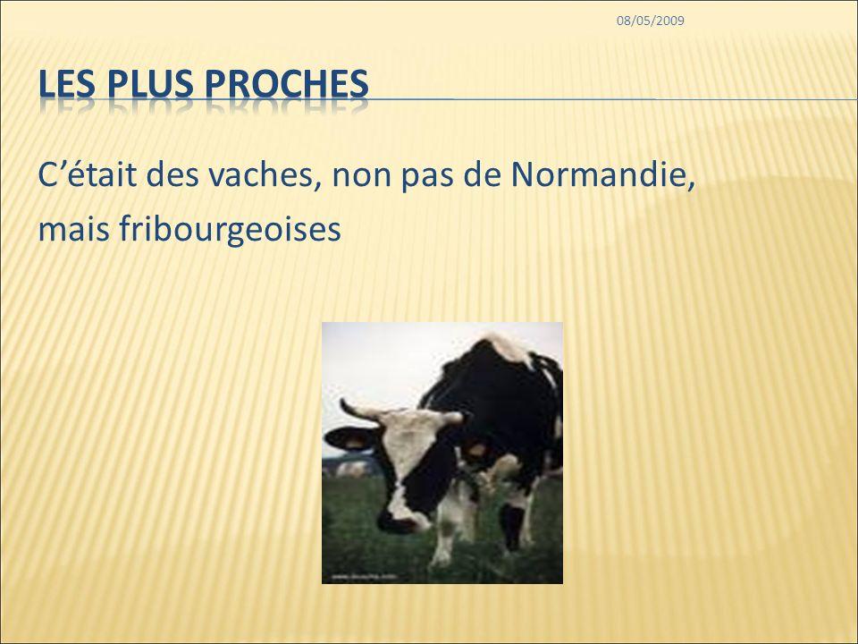 08/05/2009 Cétait des vaches, non pas de Normandie, mais fribourgeoises