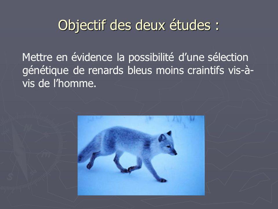 Objectif des deux études : Mettre en évidence la possibilité dune sélection génétique de renards bleus moins craintifs vis-à- vis de lhomme.