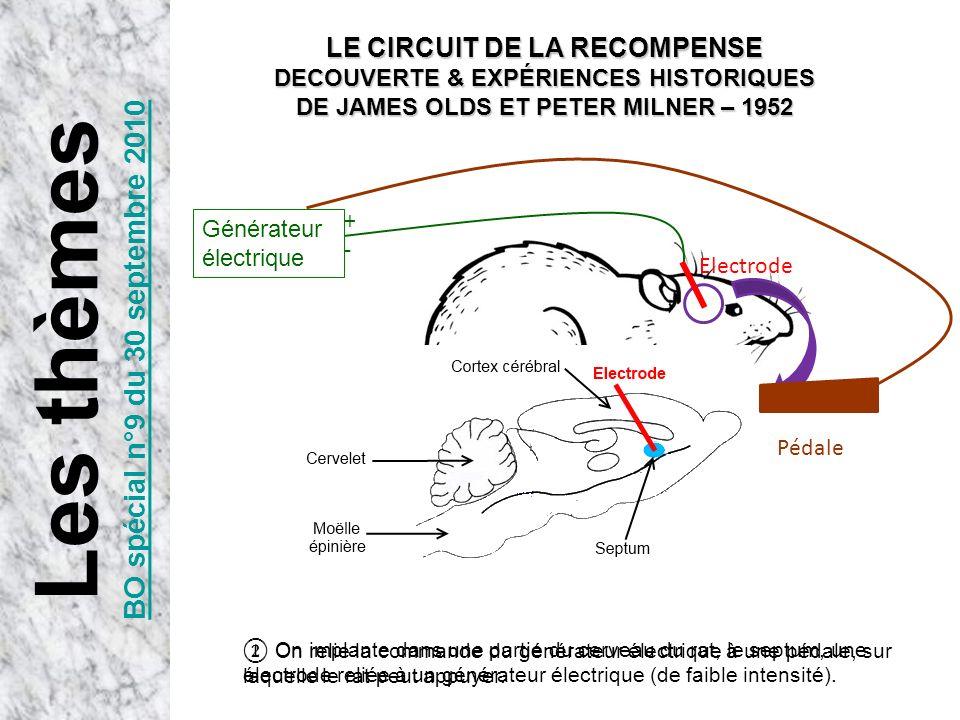 Electrode +-+- On implante dans une partie du cerveau du rat, le septum, une électrode reliée à un générateur électrique (de faible intensité). Généra